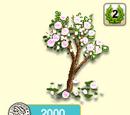 Mandelbaum weisse Blüte