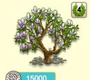 Magnolie lila Blüte