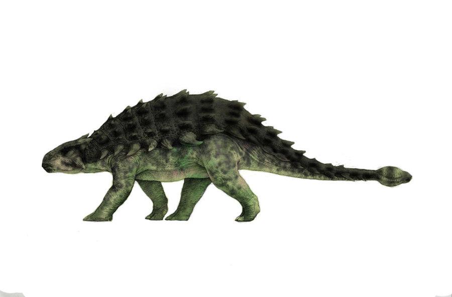 Jurassic_park_ankylosaurus_by_jurassicrex-d5af1md.jpg