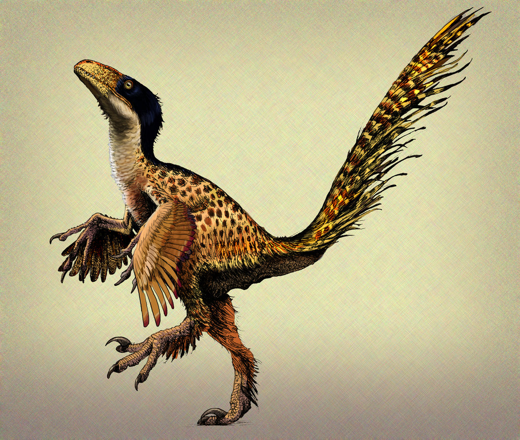Possibe depiction of a feathered UtahraptorUtahraptor Skeleton