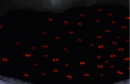 254Eyes appear.png