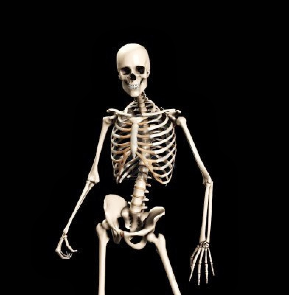 Full resolution   Skeleton