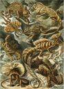 Haeckel Lacertilia.jpg