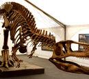 Fransaurus centurion/Tyrannotitan