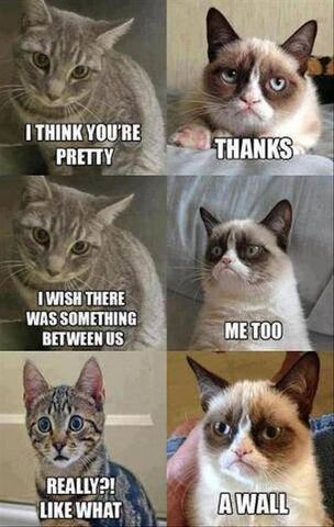 OMG THIS PICTURE IS FUNNY XD 304px-Funny-cat-meme-comic-strip