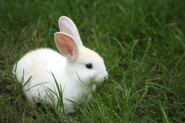 Fluffy White Baby Bunnies | Wallpapers Gallery |Awesome Baby White Bunnies