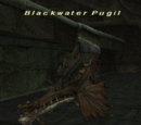 Blackwater Pugil