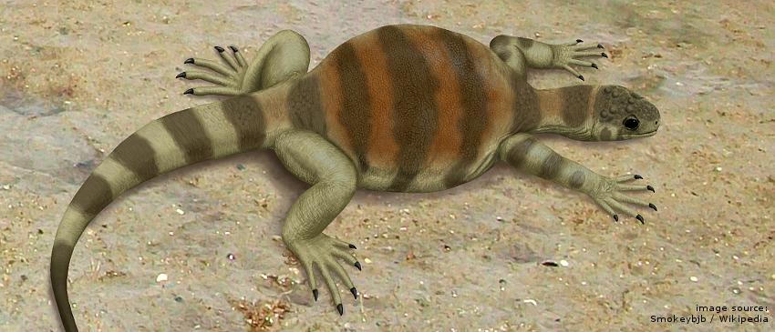 Eunotosaurus_africanus_1370032086.jpg