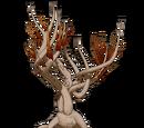 Bristlebrush