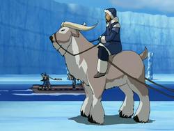 Sistema de Animais 250px-Buffalo_yak