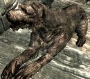 Собаки (Skyrim)