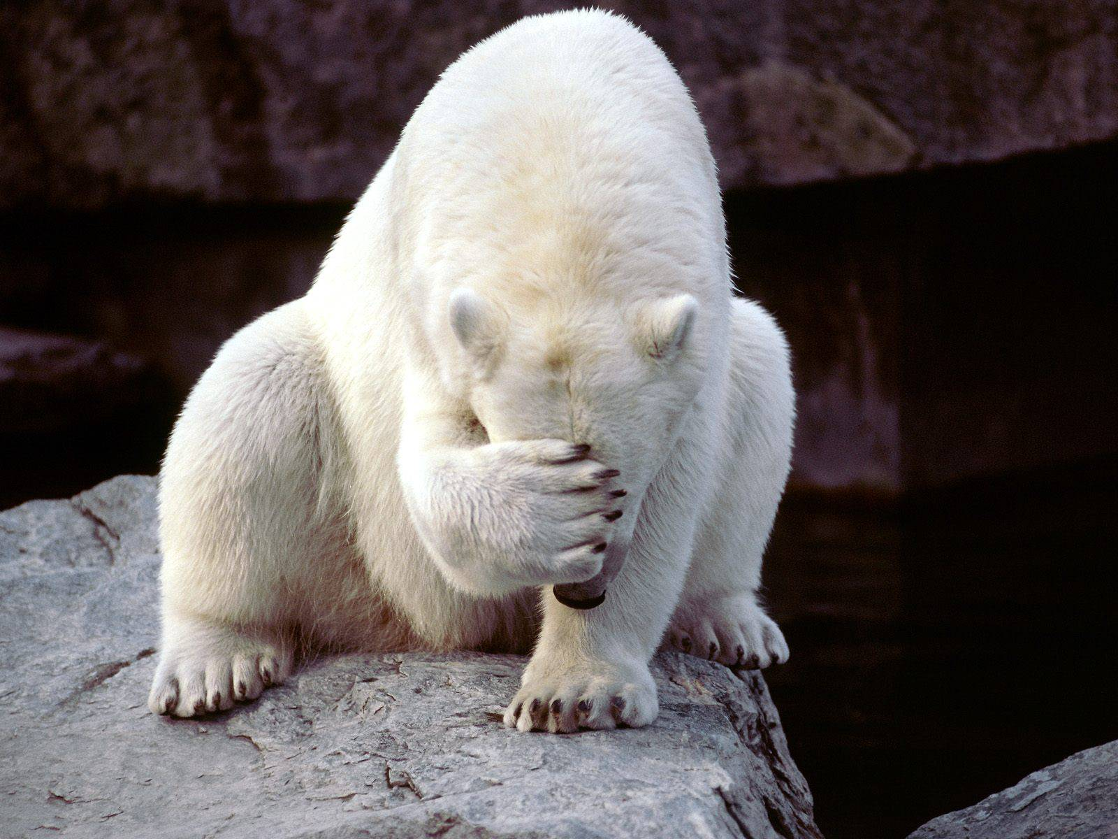 POlar_facepalm.jpg