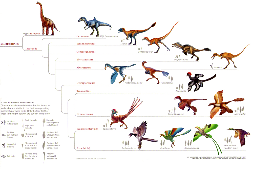 A Comparison of Primates and Modern Humans