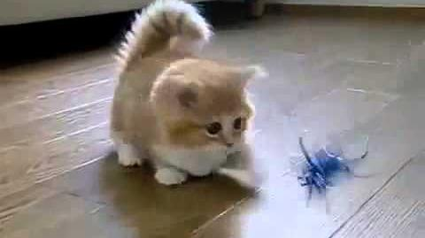 ♥ El Gato Mas Tierno Del Mundo ♥ Los Mejores videos de gatos ★ Humor Gatos Chistosos