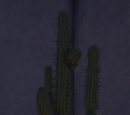 Cactus, Style 1