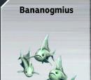 Bananogmius