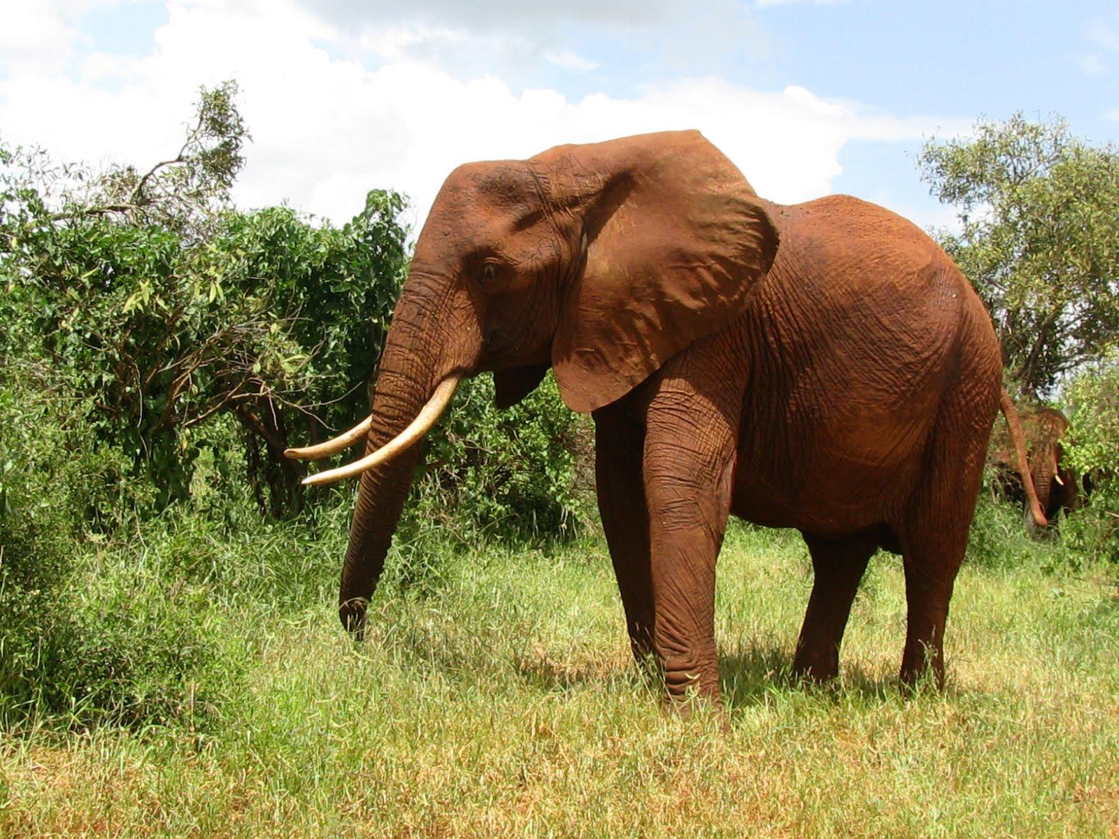 African Safari Animals...