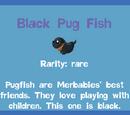 Black Pug Fish