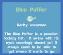 Blue Puffer