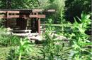 Lily Pool (Erudite).png