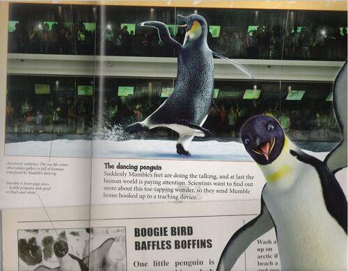 Happy #penguinawarenessday! Looking for a fun winter ... |Happy Feet Zoo Aquarium