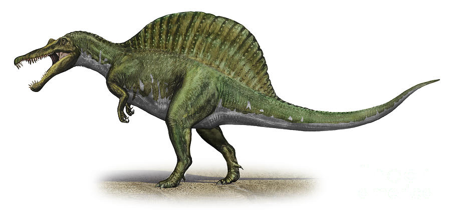 http://img2.wikia.nocookie.net/__cb20140505223505/prehistrico/es/images/6/6f/Spinosaurus-aegyptiacus-a-prehistoric-sergey-krasovskiy.jpg