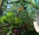 Mr.Blue Bird/About blue spix macaws in Rio 2
