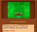 Stachelkraut