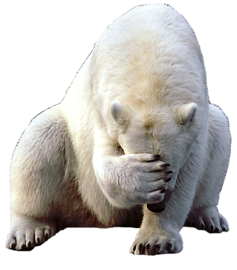 Facepalm-ours-blanc.png
