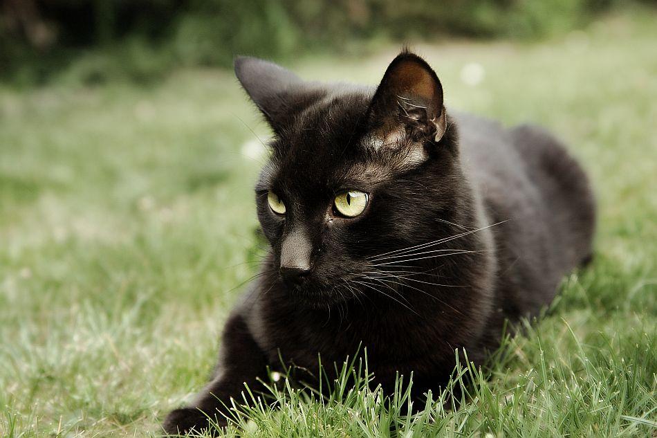 Emberclan Warrior Cat Clans Wiki