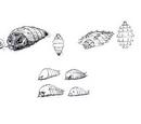 Primitive Mothra/Gallery