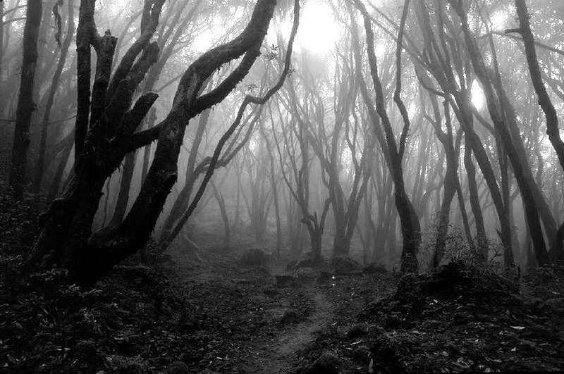 Bosques de noche tenebrosos - Imagui