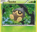 Seedot (Flashfire 5)