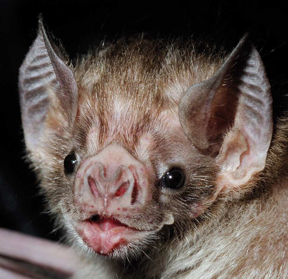 bat удаление файлов: