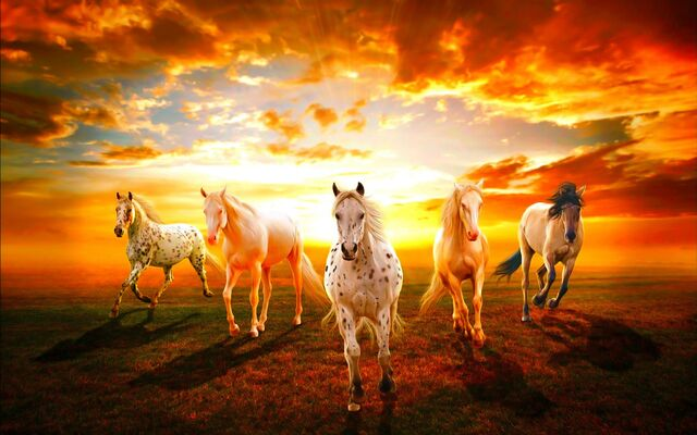 Equines's Display Picture