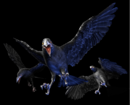 RE0 Crows.png