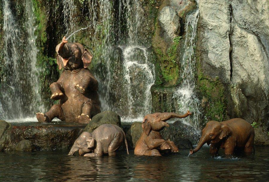 Jungle Cruise - Disney Wiki