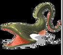Pelican Eel