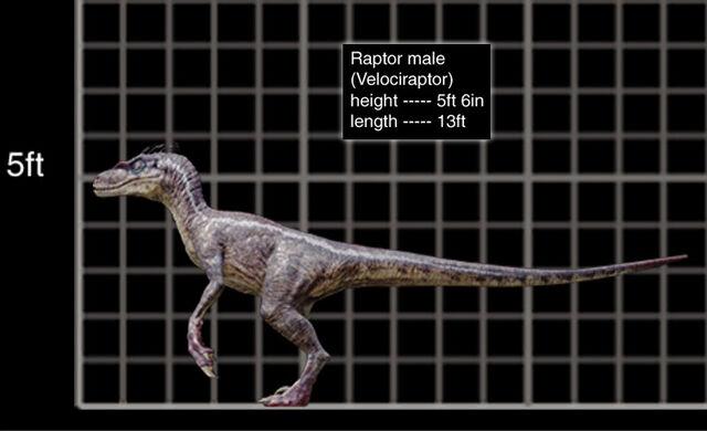 Image - 800x488 Velociraptor male size chart.jpg - Park ...