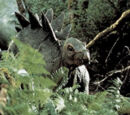 Claire (stegosaurus)