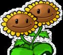 Doppelsonnenblume