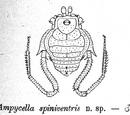 Ampycella spinivestris