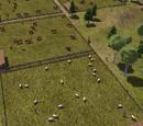 Скотовод