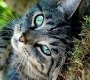 Brown Tabby Cats Gallery