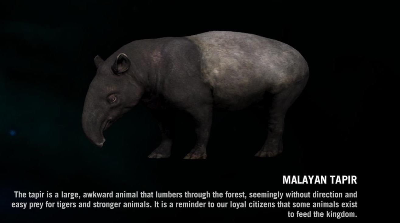 Malayan Tapir Far Cry Wiki