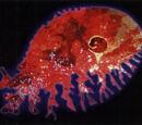 Giant Space Amoeba