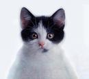 Kitty-Penguin