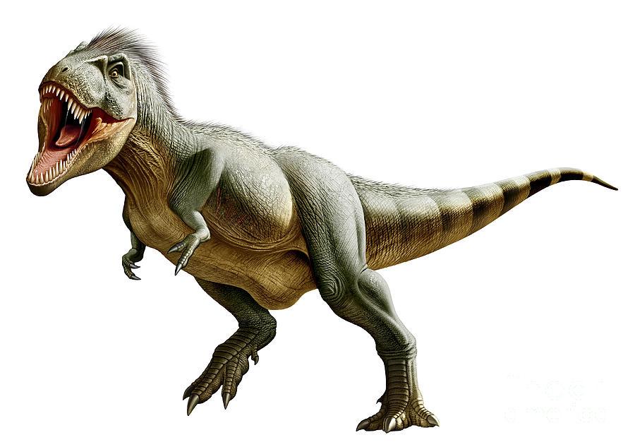900 x 633 jpeg 75kBTyrannosaurus