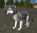 Wolf pup (2.7)