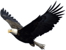 Eagle PNG1237.png